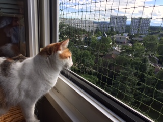 Protection pour chat fenetre - Vernier